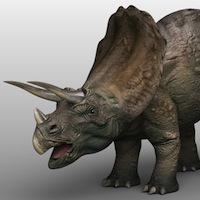 Triceratops model by 3d_Wanderer
