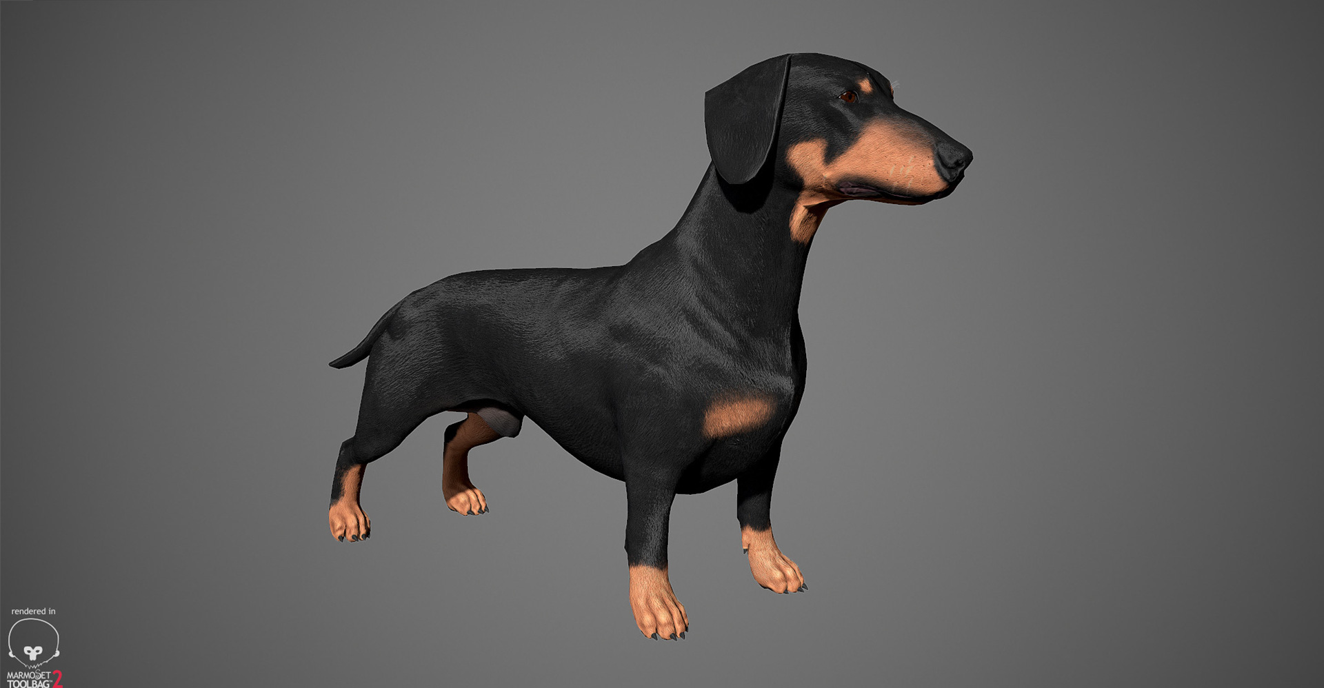 Dachshund 3D model by lashkoalex