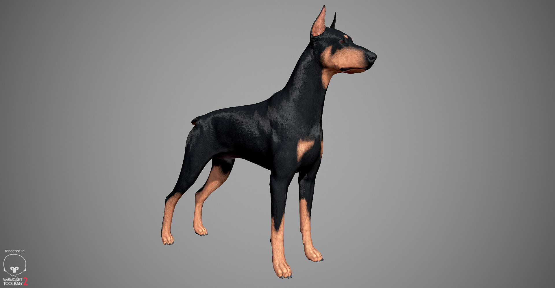 Doberman 3D model by lashkoalex