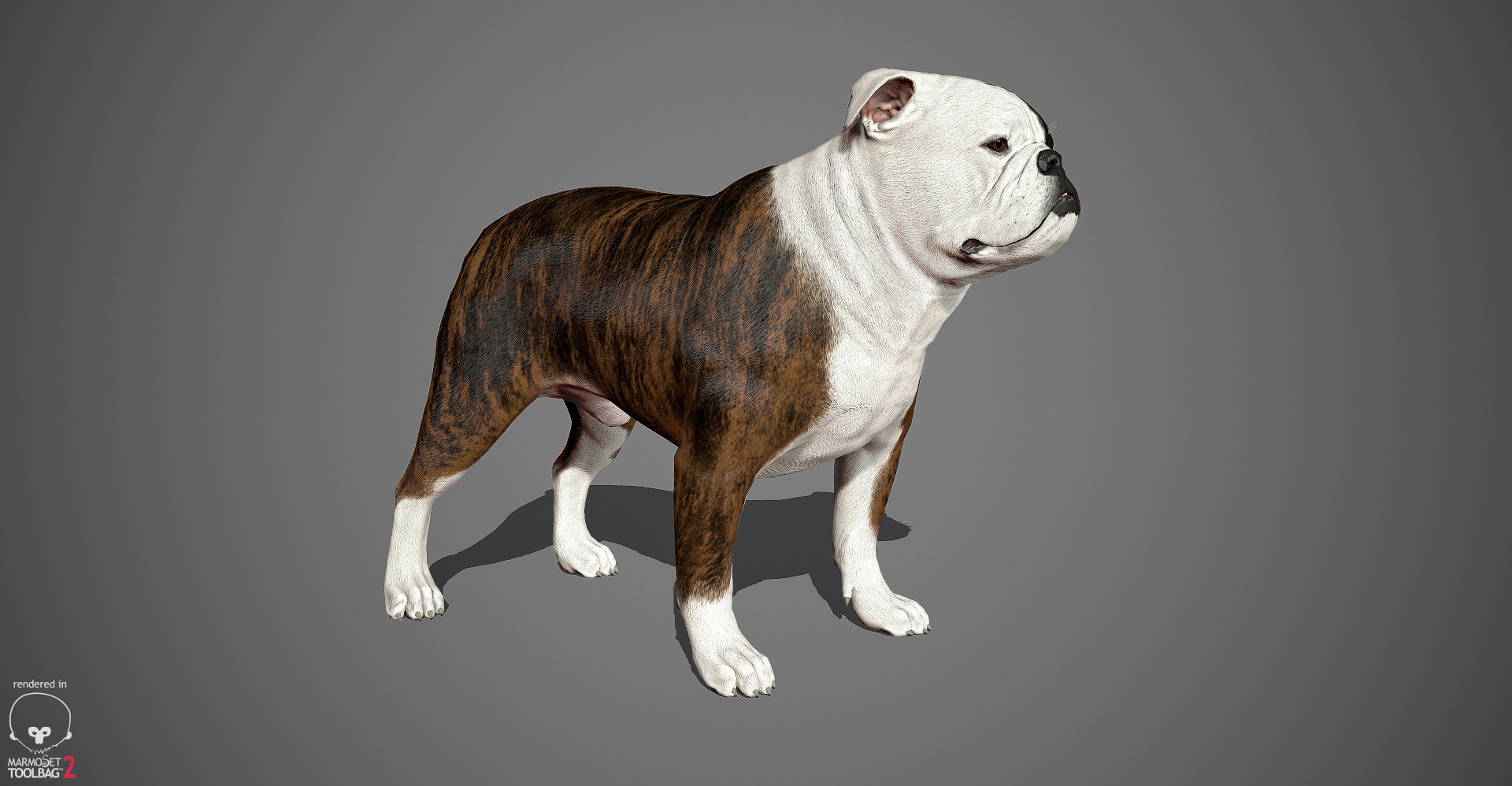 English Bulldog 3D model by lashkoalex