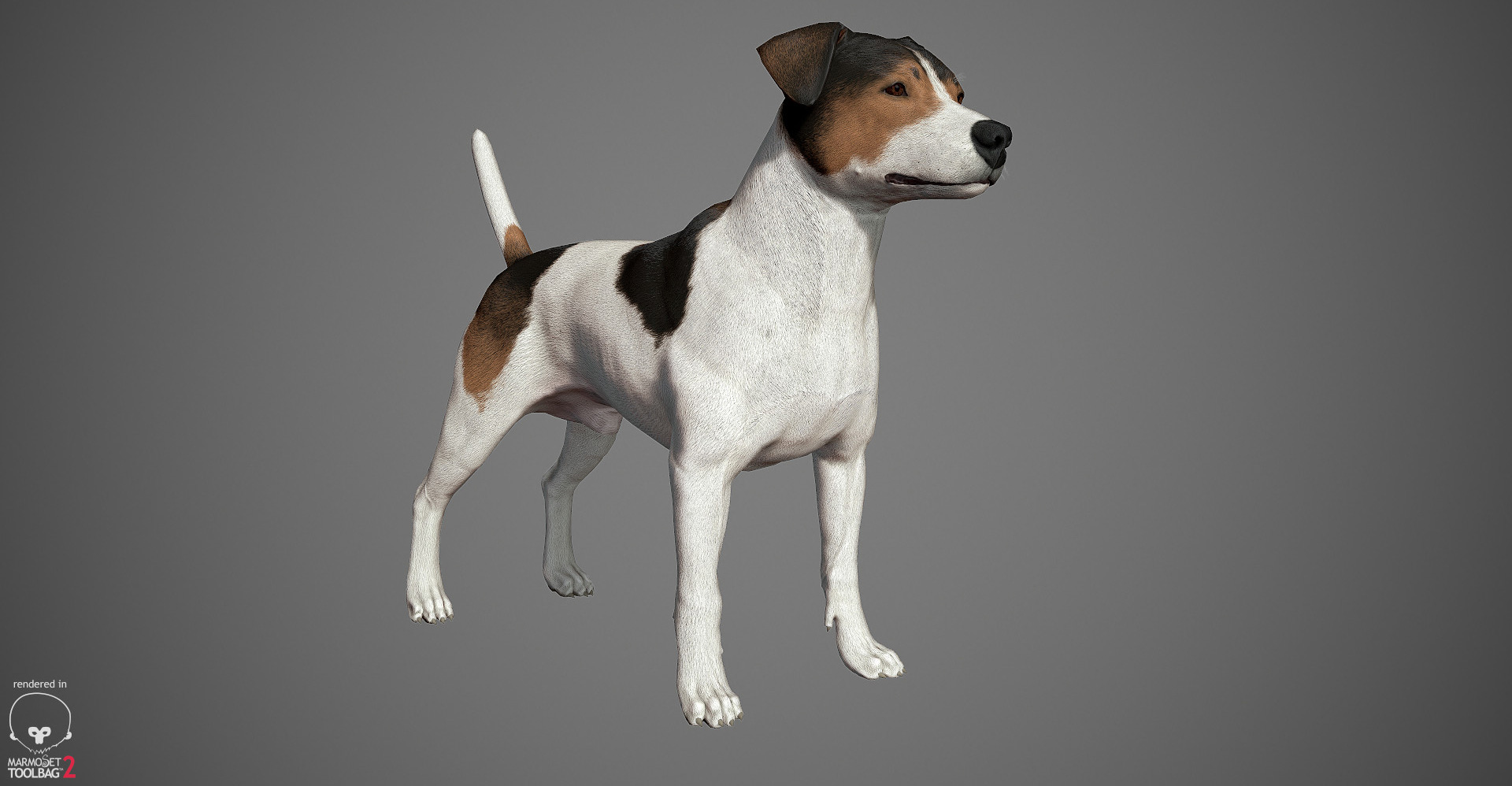 Jack Russell Terrier 3D model by lashkoalex