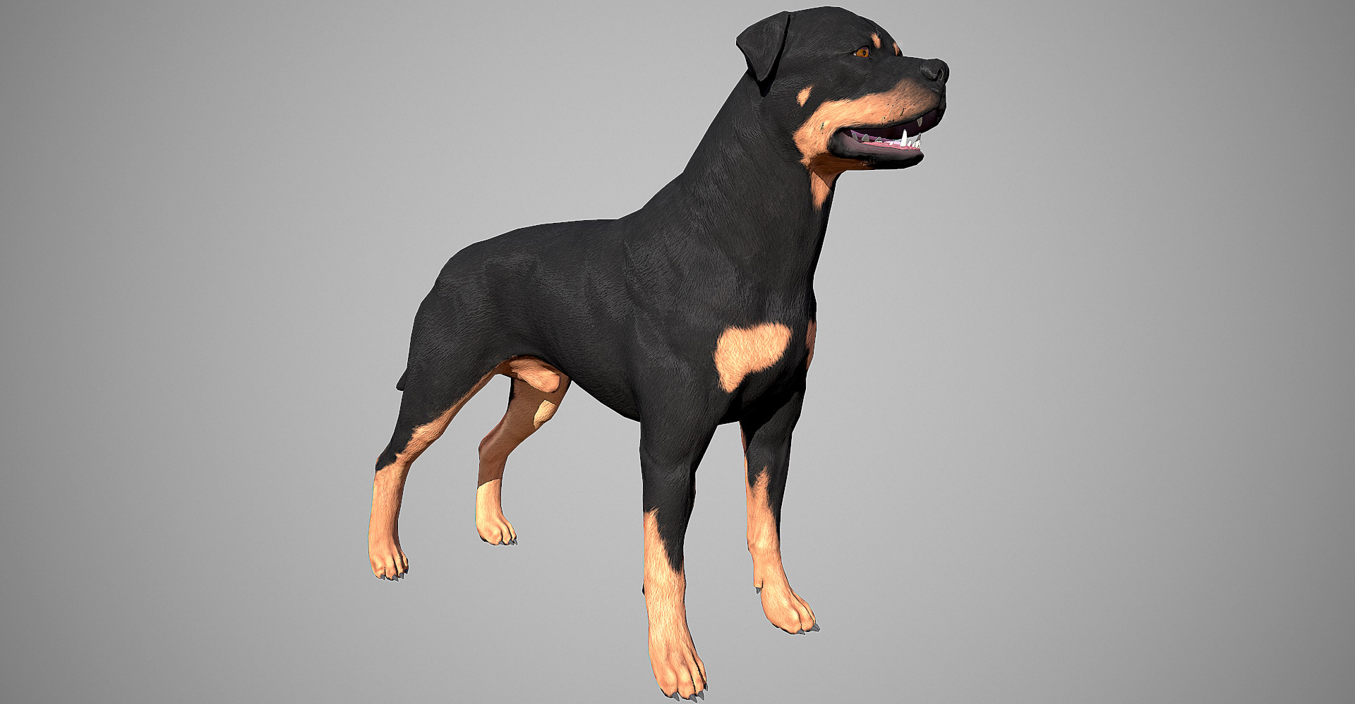 Rottweiler 3D model by lashkoalex