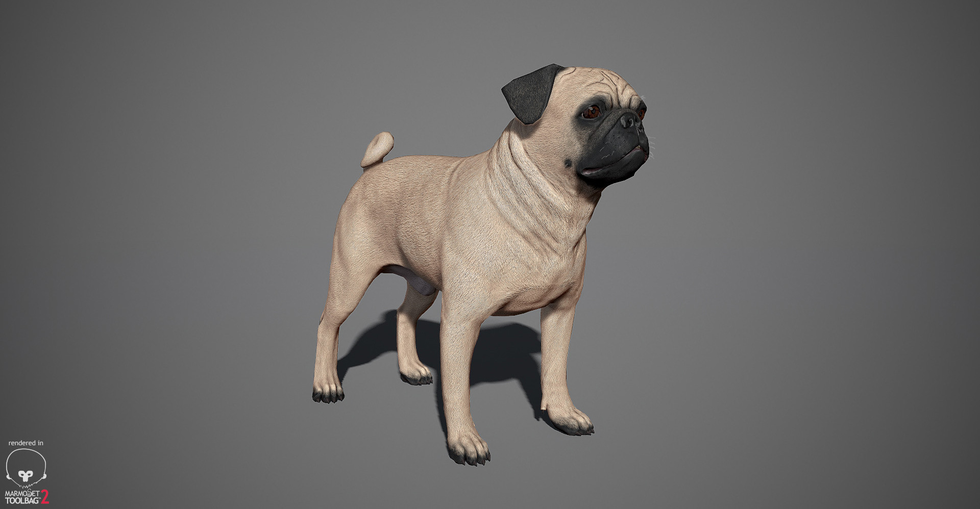 Pug 3D model by lashkoalex
