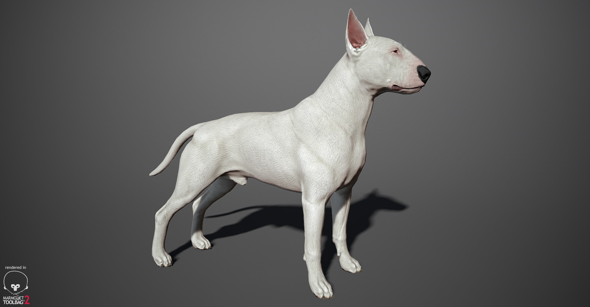 Bull Terrier 3D model by lashkoalex