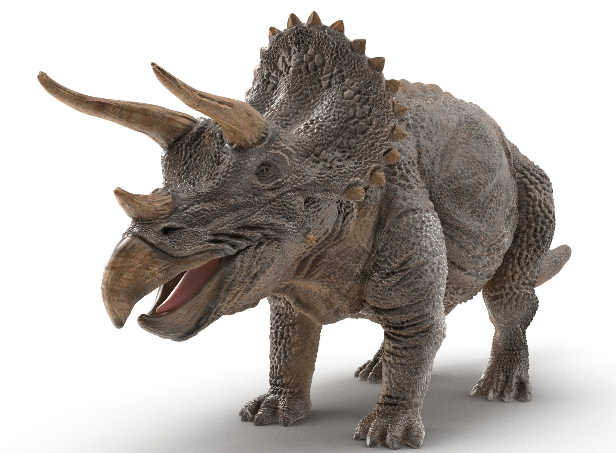 Triceratops 3D model by RaveeCG