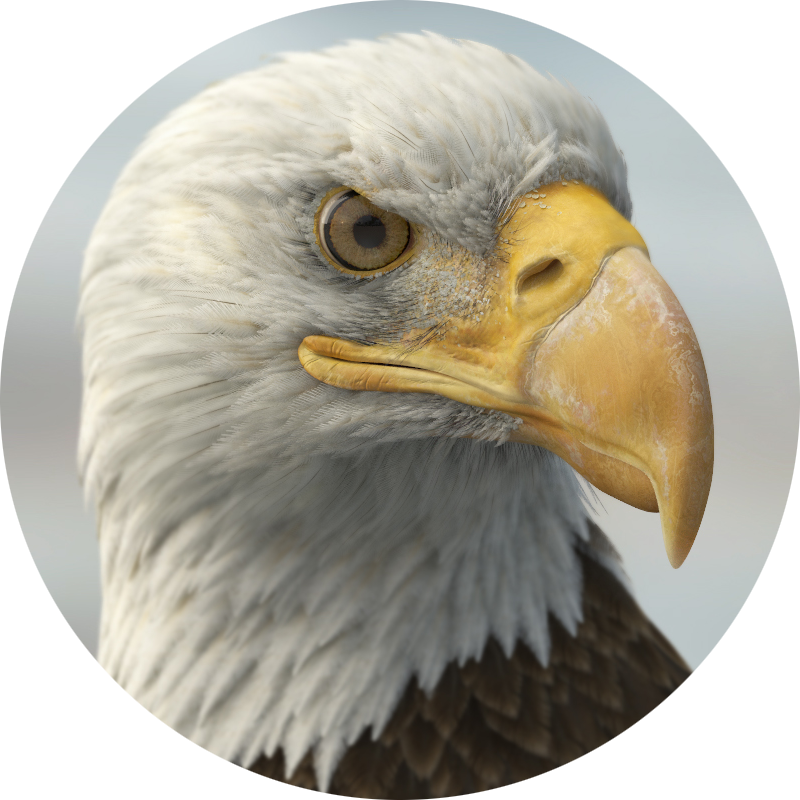 detailed 3d eagle model by Missset