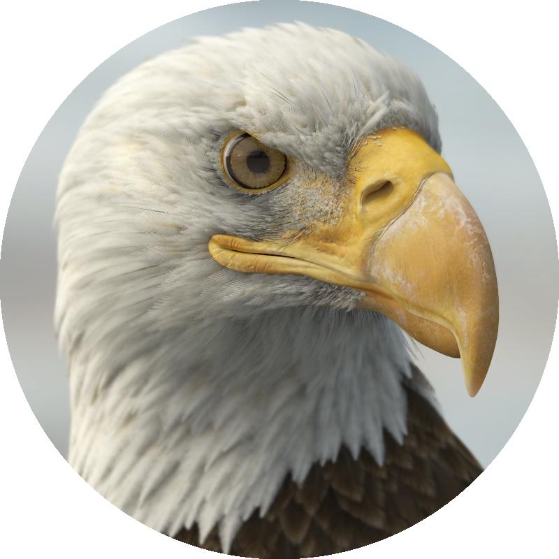 detailed 3d eagle model by Missset