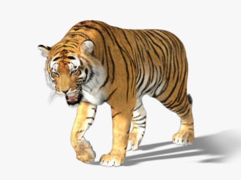 Tiger 3d model by Massimo Righi