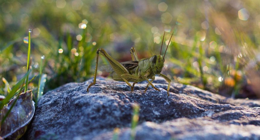 3D Grasshopper Eating Pose model by 3d_molier International